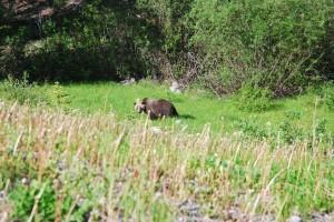 closer bear
