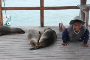 Cam + sea lions