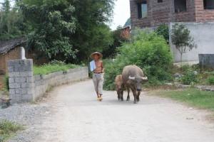 man with yak
