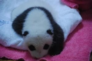 panda crib 2