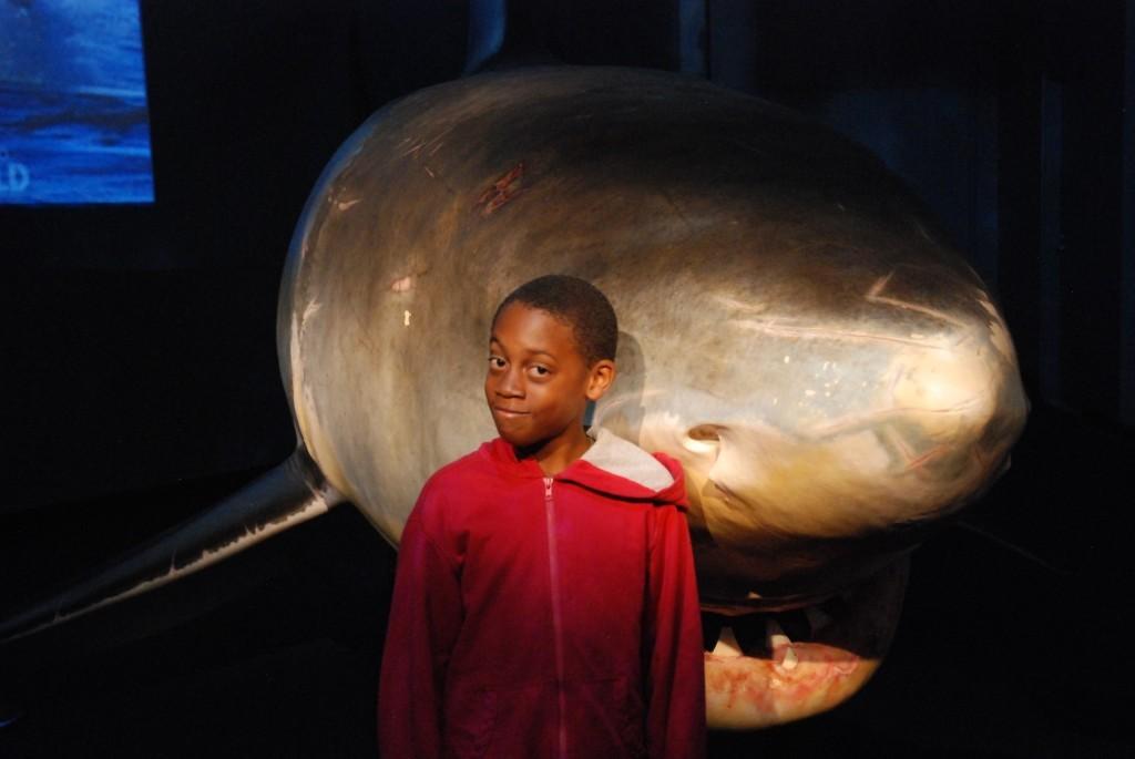 ethan shark