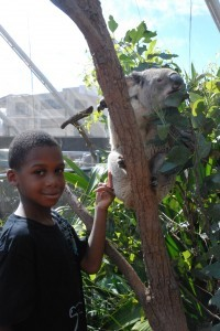 Cam's koala
