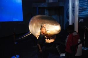 Cam's shark