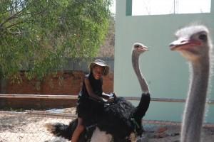 ostrich e