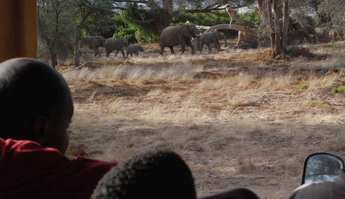Elephant watching dad and C