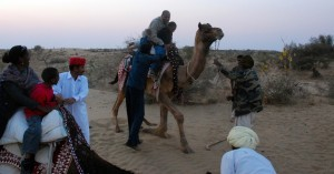 Getting up Camel