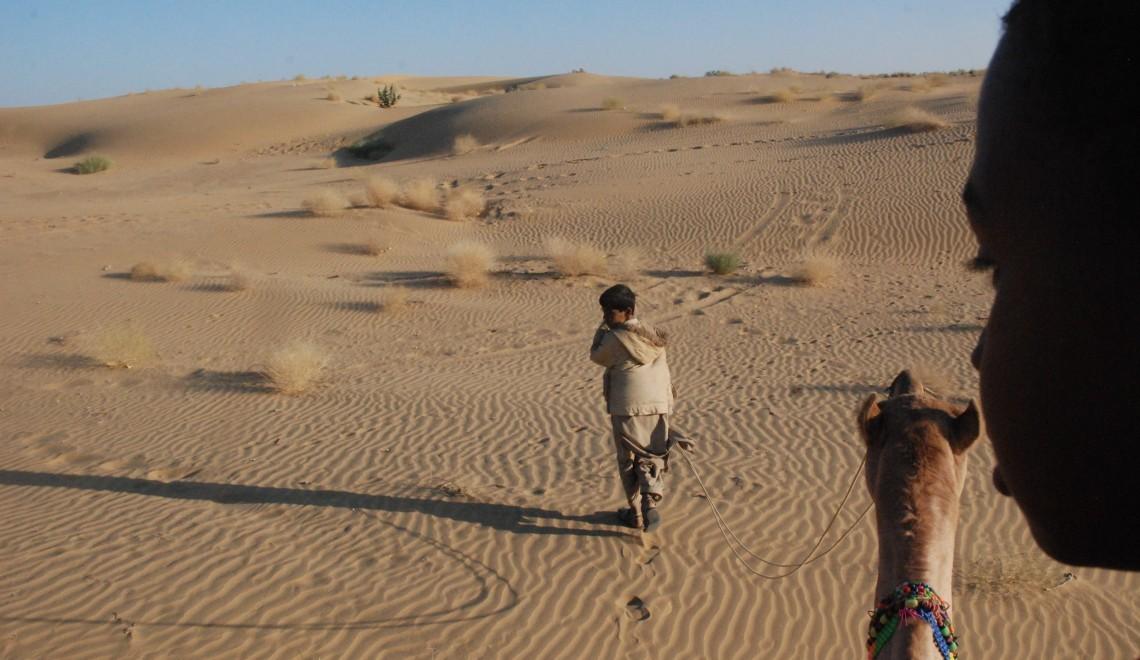 Camel Cam