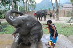 washing elephants thailand