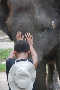E Thai Elephant