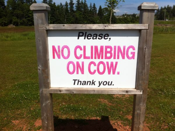 cow sign pei