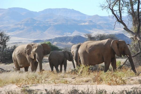 Christmas Elephants