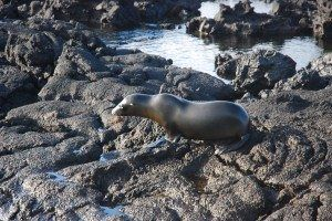10 Fast Facts about Galapagos Islands on Globetrotting Mama