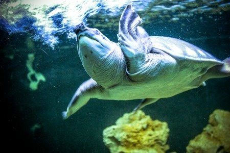 Happy World Turtle Day - Travel Experiences Inspired By These Sea Creatures on GlobetrottingMama.com