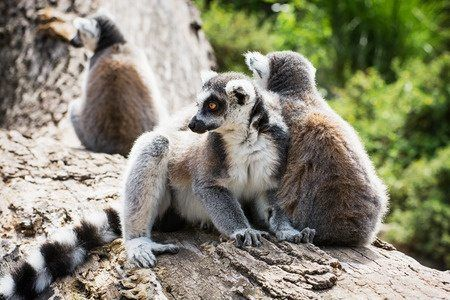 Visiting Leaping Lemurs in Miami. Planning Your Florida Vacation with Globetrotting Mama