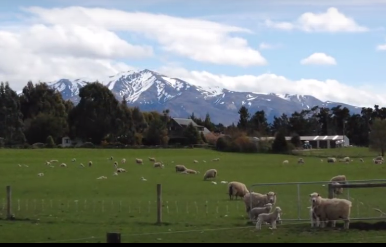 Re-Live Spring and Head to New Zealand! All About New Zealand on GlobetrottingMama.com