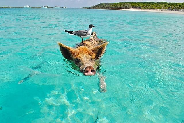 Travel Deals - Tropical Getaways on GlobetrottingMama.com
