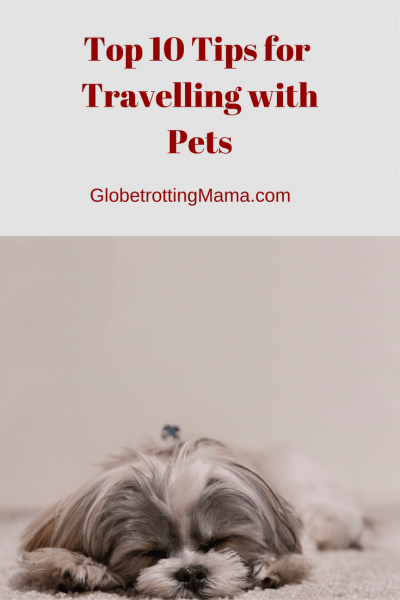 Top 10 Tips for Travelling with Pets - Globetrotting Mama